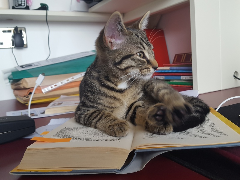 Kitten Retho lies comfortably on an open circus book.